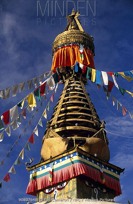 Swayambhunath Stupa in Kathmandu, Nepal. It is the most ancient holy shrine in Kathmandu valley, and on each of the four sides of the main stupa are a pair of big eyes. ^^^These eyes are symbolic of God's all-seeing perspective. The shrine's worshippers include Hindus, Vajrayana Buddhists of northern Nepal and Tibet, and the Newari Buddhists of central and southern Nepal. Pilgrims circumambulate the stupa.