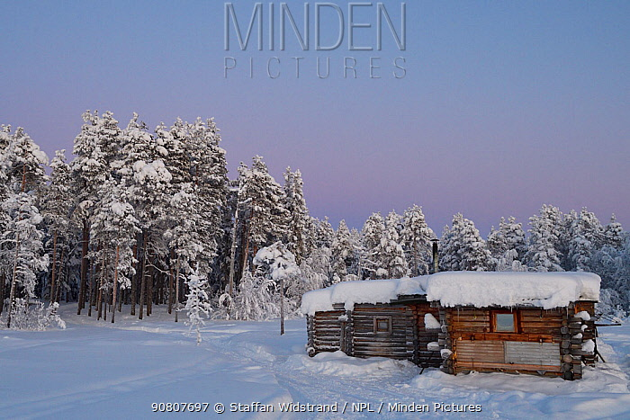 Eagle watching hide with forest beyond, snow covered. Ecotourism site ,Kalvtrask, Vasterbotten, Lapland, Sweden. January.