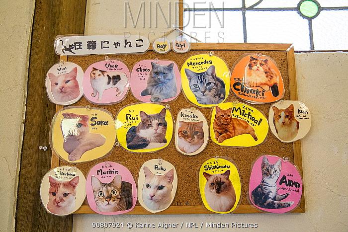 Names of cats on board at the Kawaramati Cat Cafe Kyoto, Japan