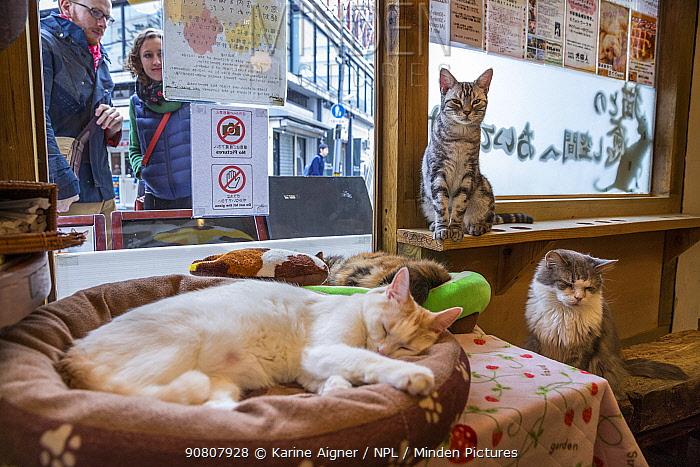 Cats resting at Kawaramati Cat Cafe Kyoto, Japan