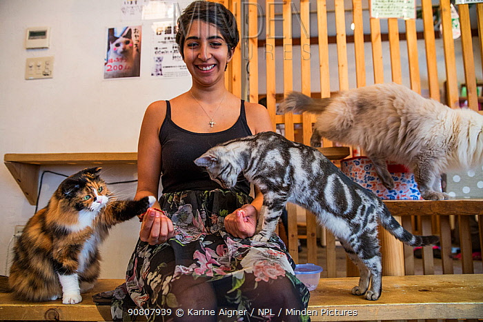 Woman with cats at Kawaramati Cat Cafe Kyoto, Japan