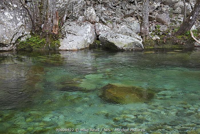 Restonica River, Parc Naturel Regional de Corse, Corsica, France, April.