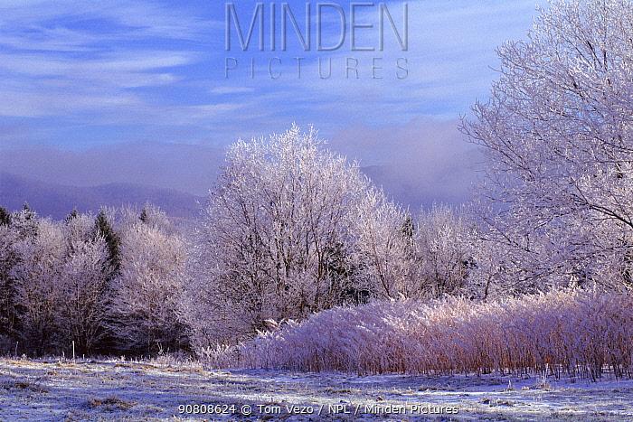 Winter landscape, Vermont, USA