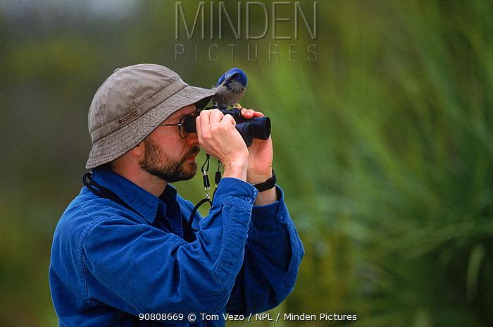 Scrub jay {Aphelocoma coerulescens} on birdwatcher's binoculars, Florida, USA