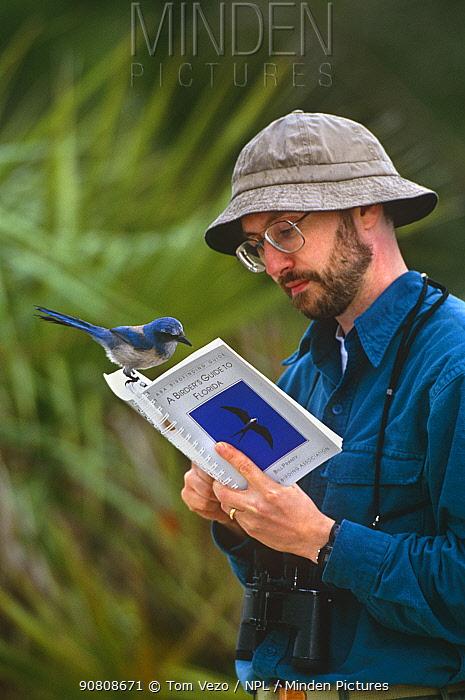 Scrub jay {Aphelocoma coerulescens} on birdwatcher's reference book, Florida, USA