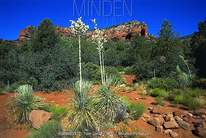 Red rock country, Sedona, Arizona, USA