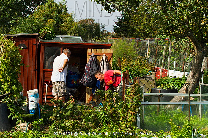 Productive allotment including bee pollinated plants, Eastbourne, East Sussex, England, UK, September 2014.
