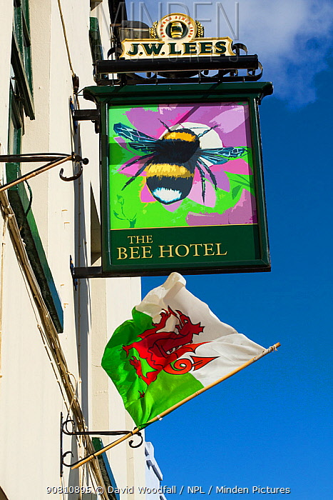 Sign for The Bee Hotel, with drawing of Bumblebee (Bombus) and Welsh flag below, Abergele, Denbighshire, Wales, UK. August 2014.