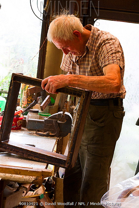 Beekeeper making frames for honey bees, Usk, Gwent, Wales, UK. August 2014.