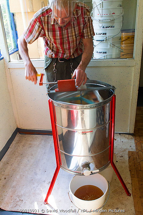 Beekeeper Nick Hunt, using machine to extract honey from combs. Usk, Gwent, Wales, UK, August 2014.