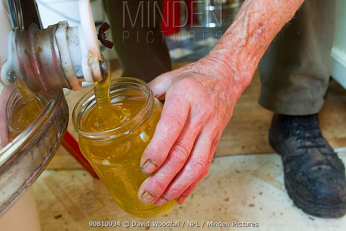 Beekeeper filing jar of honey from honey extracting machine. Usk, Gwent, Wales, UK, August 2014.