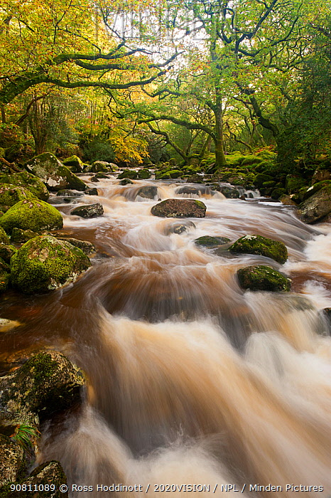 River Plym flowing through Dewerstone Wood, Shaugh Prior, Dartmoor National Park, Devon, England, UK, October 2011.