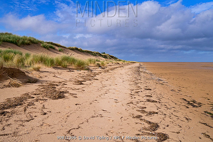 Beach and sand dunes at East Hills, North Norfolk, England, UK. October 2015.