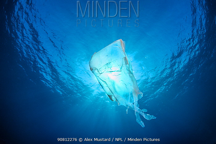 Discarded plastic bag which looks like a jellyfish in open water. East End, Grand Cayman, Cayman Islands, British West Indies. Caribbean Sea.