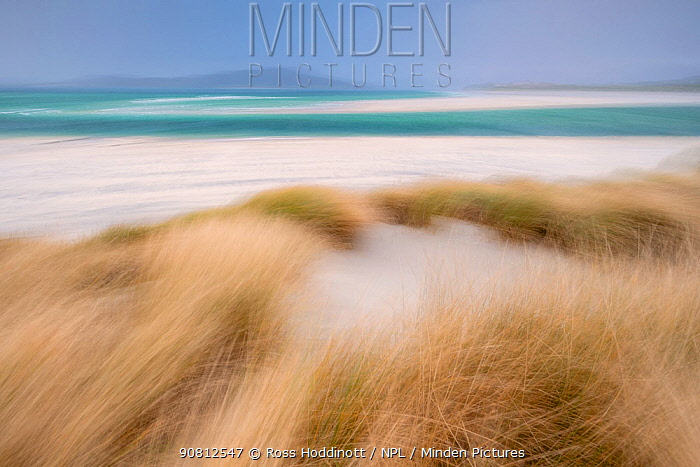 Sand dunes with Marram grass (Ammophila arenaria) and beach at Seilebost beach, Isle of Harris, Scotland, UK. October