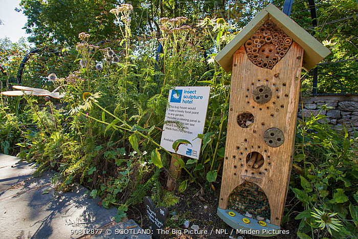 Wooden 'bug house' for use in garden to provide habitat for insects, Scotland, UK, September 2015.