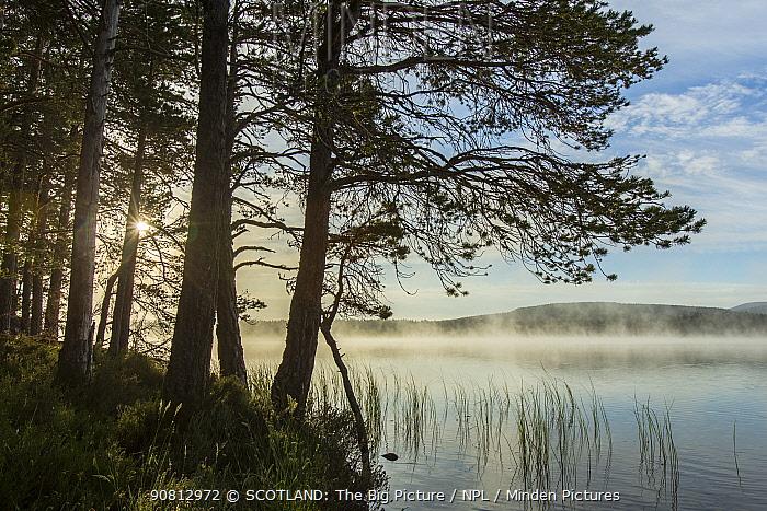 Loch Garten and surrounding Scots pine (Pinus sylvestris) forest of Abernethy, Cairngorms National Park, Scotland, UK, June.
