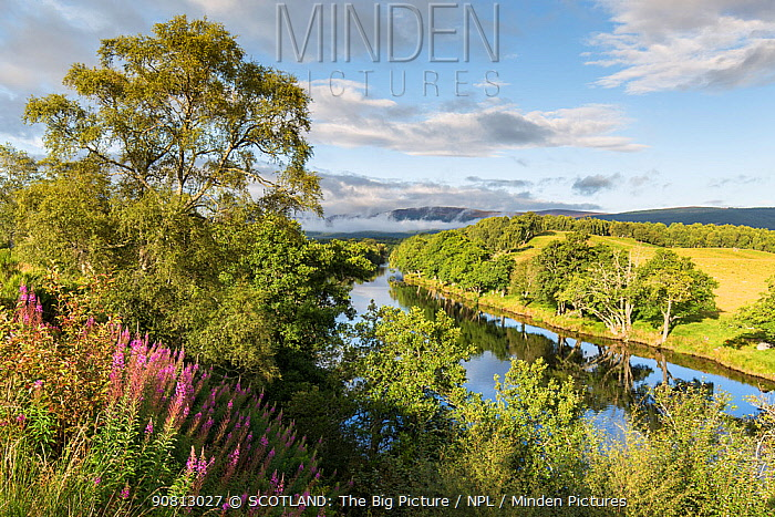 River Spey and riparian habitat in summer, Cairngorms National Park, Scotland, UK, August.