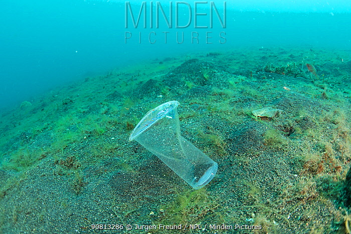 Discarded single use plastic water cup being carried by the current, resembling a jellyfish, Sulawesi, Indonesia. November 2018.