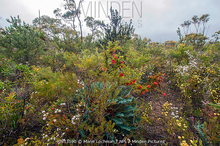 Biodiversity of flora in heath / Kwongan habitat , Western Australia, South west, Stirling Range National Park, October 2017