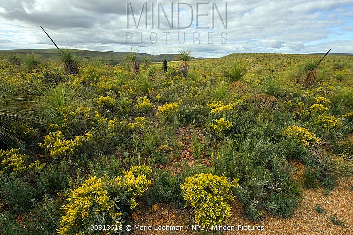 Mt. Lesueur, Mount Lesueuri National Park. Western Australia, October 2015