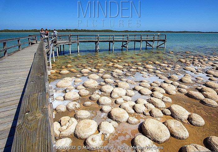 Thrombolites at Lake Clifton, Yalgorup National Park, south west, Western Australia, April 2017