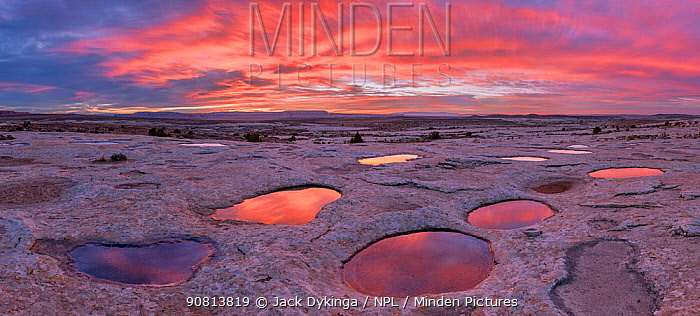 'Pot Holes' full of rain water, with reflections of clouds at sunset. Milkyway, Bears Ears National Monument, Echo Mesa, Utah. USA. November 2018.