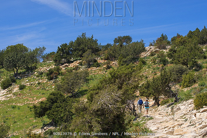 Hikers walking rocky landscape with trees. Akamas Peninsula National Park, Cyprus. April 2017.