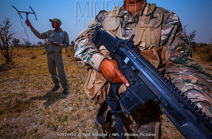 Member of Botswana's Anti Poaching Unit keeps guard while a rhino monitor from the charity Rhino Conservation Botswana tracks a rhino in Okavango Delta, Botswana,. Rhino Conservation Botswana works hand-in-hand with Botswana's Defence Force and Anti Poaching Unit to keep the country's rhino populations safe. Botswana lost all of its rhinos to poaching in the 1990s and reintroducing rhinos to re-establish populations.