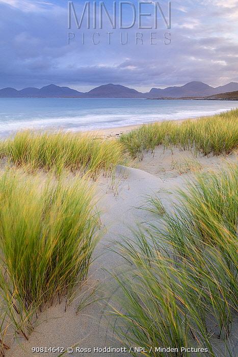 Sand dunes, marram grass (Ammophila arenaria) and beach at sunrise, Luskentyre, Isle of Harris, Scotland, UK. October 2018