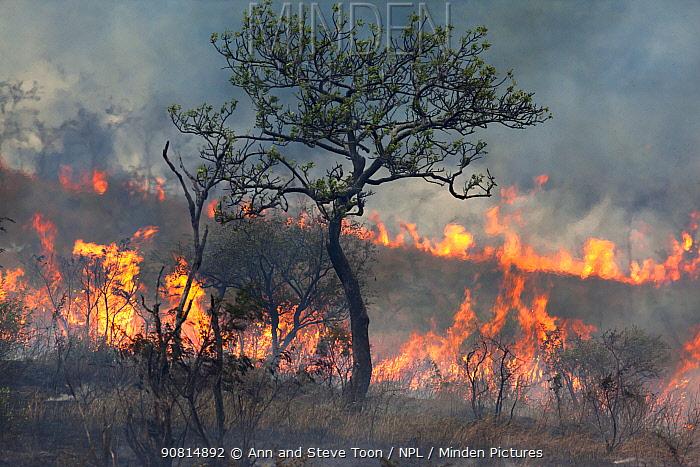 Wild fire raging in Imfolozi game reserve, Kwazulu Natal, South Africa, June 2012