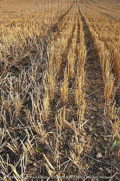 Stubble left in fields after harvest, Haregill Lodge Farm, Ellingstring, North Yorkshire, England, UK, September.