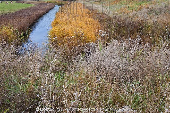 Drainage ditch, Vange Marsh RSPB reserve, Essex, England, UK, November.