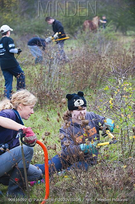 Young volunteers clearing scrub, RSPB Vange Marshes reserve, Basildon, Essex, England, UK, November 2011. Model released.