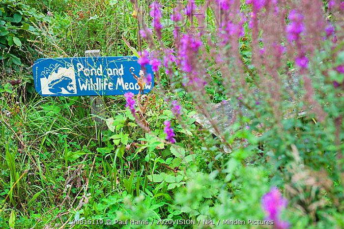 Sign for pond and wildlife meadow, Brockwell Park Community Gardens, London, England, UK, August