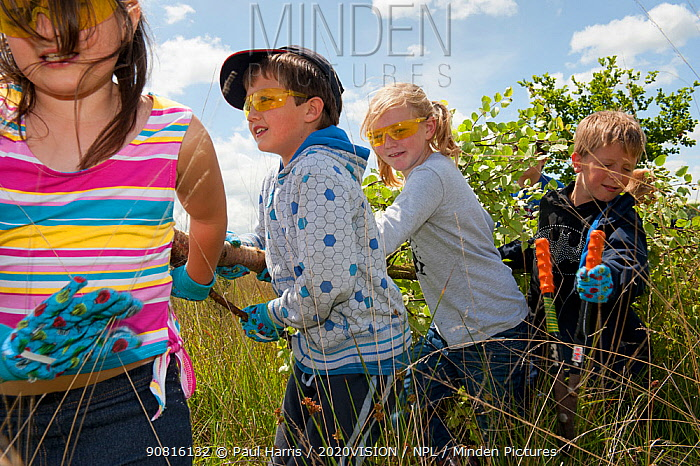 Children from St John and St Francis Church of England School helping with ground clearance at Westhay Nature Reserve, Somerset Levels, England, UK, June 2011. Model released. 2020VISION Book Plate.