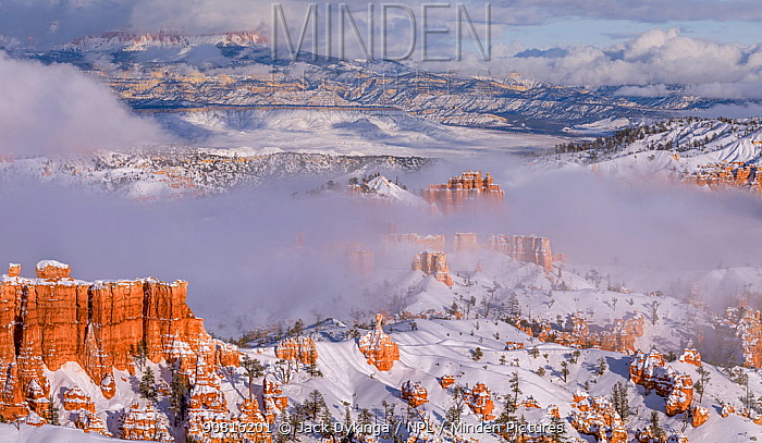 Landscape of hoodoos in snow at sunrise, Bryce Canyon National Park, Utah, USA, January.