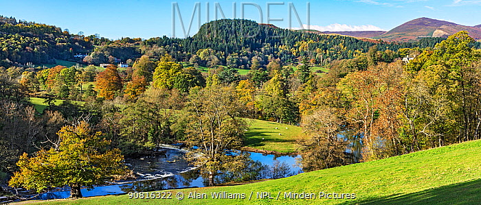 Horseshoe Fals on the River Dee near Llangollen looking west with Llantysilio Mountain in the background on the right, North Wales, UK November 2018.