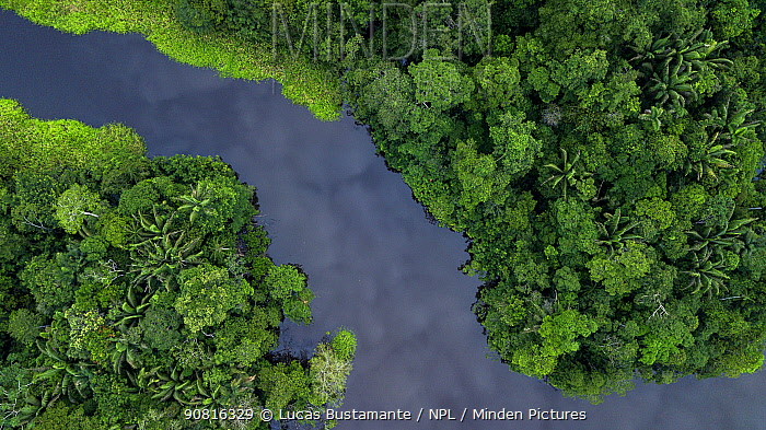 Black river water creek in the Amazon Basin. Yasuni National Park, Orellana, Ecuador