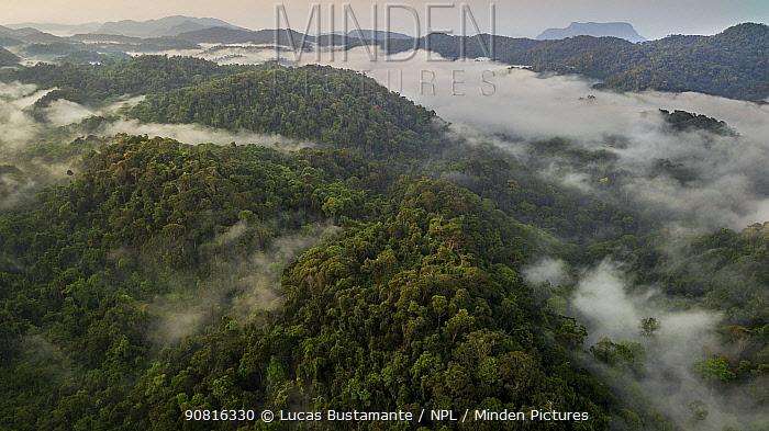 Cloudforest landscape. Sinharaja, Southern Province, Sri Lanka