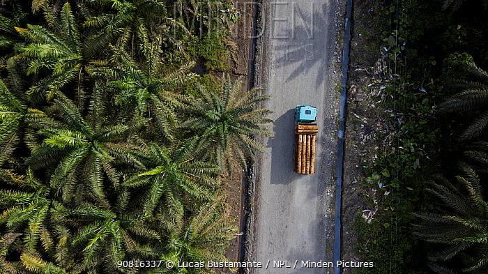 Palm oil crops and deforestation in the Ecuadorian Choco, Esmeraldas, Ecuador
