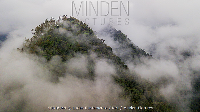 Ecuadorian Western cloudforest landscape. Mindo, Pichincha, Ecuador
