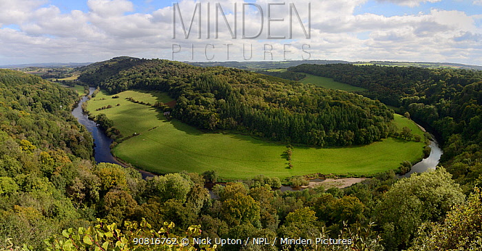Forest of Dean and River Wye overview from Symond's Yat Rock, with primarliy deciduous trees, close to sites for Pine Marten (Martes martes) releases by the Forest of Dean and River Wye Pine Marten Project, Gloucestershire, UK, September 2019.