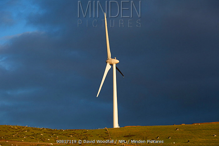 Newly constructed wind turbine on former forestry land, Denbighshire, Wales, UK, July 2017.