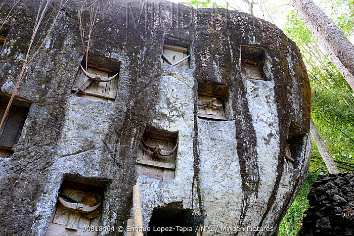 Toraja cemetery inside caves and rock walls, Tana Toraja. Toraja is an ethnic group in West and South Sulawesi. The culture revolves around death with funeral ceremonies an important part of daily life. Indonesia. 2015.