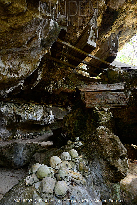Skulls and coffins in rock wall and caves of Toraja cemetery. The Toraja culture of West and South Sulawesi revolves around death with funeral ceremonies an important part of daily life. Indonesia. 2015.