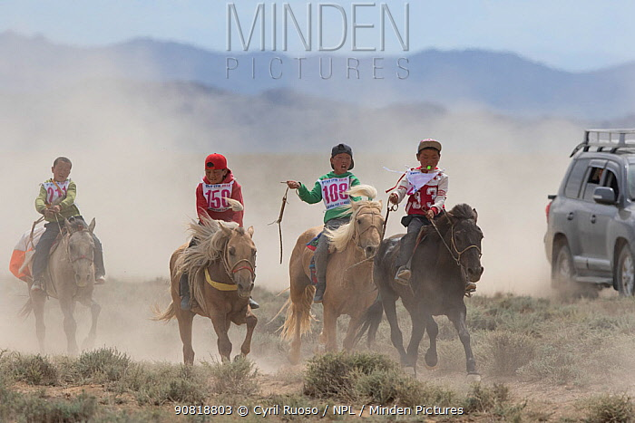 Four boys racing young horses during Naadam festival. Great Gobi B Strictly Protected Area, Mongolia. August 2018.