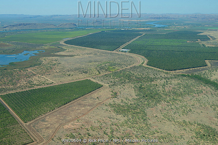 Agricultural crops, irrigated through the Ord River Irrigation Scheme. The Kimberley, Western Australia. 2015.