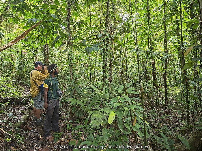 Author Mark Cocker and local guide Joseph birdwatching in tropical rainforest. Nara, Makira, Solomon Islands. 2018.