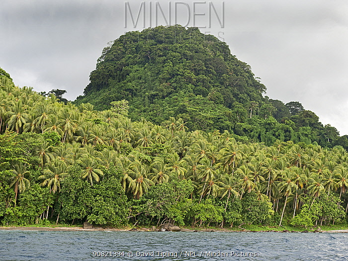 Forests on flanks of Savo volcano and along coast. Savo Island, Solomon Islands.
